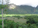 View of Pineapple Field from 4x4 Excursion, Moorea
