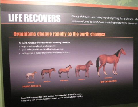 AiG Horse 'Adaptation', not 'Evolution'