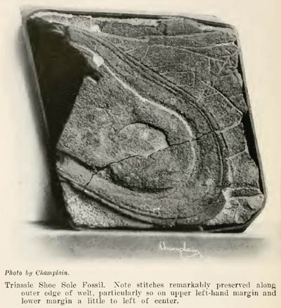 'Triassic Shoe' Iron Concretion