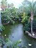 Flamingo Pond at Moody Gardens