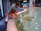 Feeding Stingrays, Kemah Boardwalk